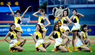 蝦毀!棒協要組中華隊辣妹啦啦隊