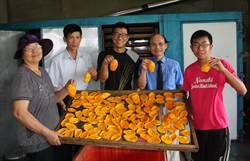 楠西芒果乾產量15萬斤 助平抑芒果價格