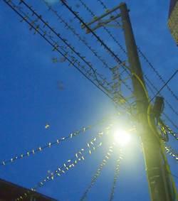 滿天燕子飛翔!恆春家燕過境 居民遭糞襲