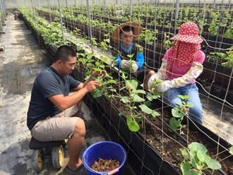 中市府推農業師徒制 年輕人搶當農的傳人