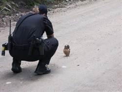 超療癒 警巡邏遇貓頭鷹寶寶