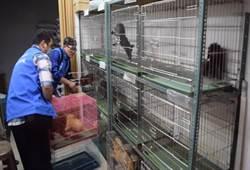 大型寵物非法繁殖場  220隻犬貓獲救