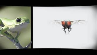莫氏樹蛙當主角 台生動畫入選國際獎項