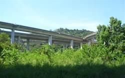 爭議路樹找新家 台中建設局打造都市森林