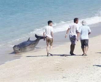 海豚擱淺墾丁 眾人合力推回大海