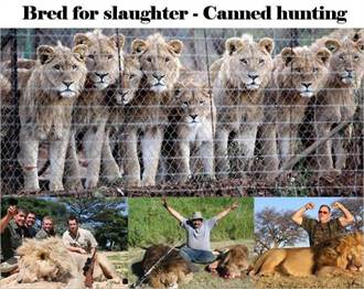 辛巴威高價販售狩獵執照 獨夫得利