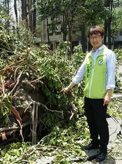 颱風過境路樹傾倒嚴重 台中議員要求總健檢