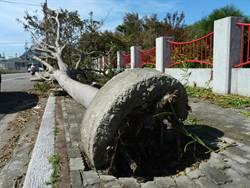 颱風過後路樹未清運 引民撻伐
