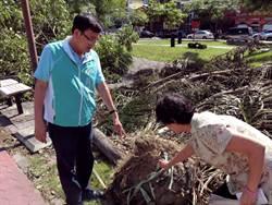 路樹傾倒 民眾質疑植樹未拆塑膠網