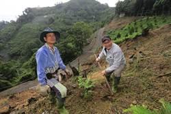 林佳龍率官員赴「賴桑」園區種牛樟樹
