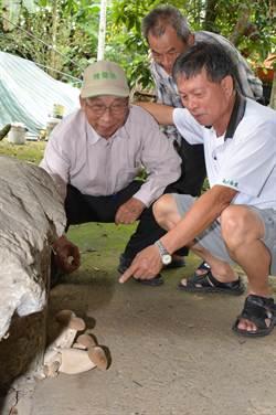 巨大蘑菇長石縫 讓80歲「鄉長爸」驚呆了