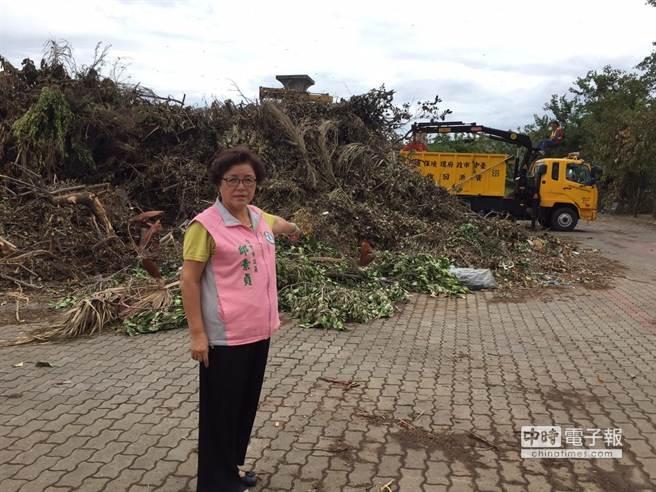 蘇迪勒颱風過境造成台中市區數千棵樹木倒塌或斷枝災損嚴重,面對「天鵝」直撲而來,引起市議員邱素貞憂心;要求市府應儘速清除。(陳世宗攝)