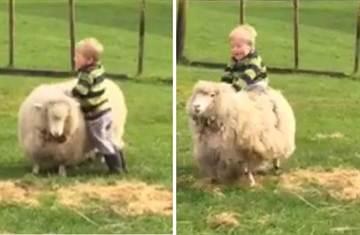 小屁孩大膽騎羊奔跑 讓網友都笑翻了
