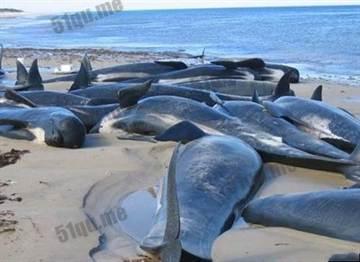 揭密!海豚究竟為什麼會擱淺自殺?