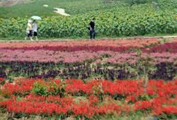 重慶打造花卉旅遊