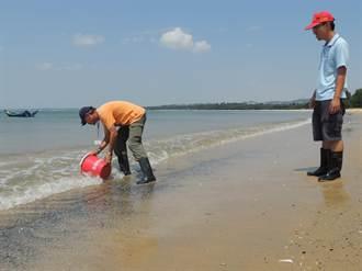 金門海域油花汙染? 「球型棕囊藻」啦!