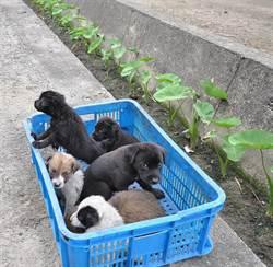 太狠了!7隻小狗丟包大排差點淹死!