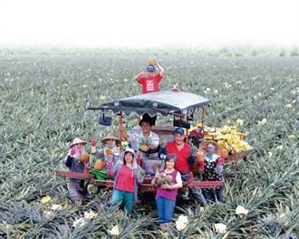 土鳳梨創6,000萬產值 花蓮富興旺來大翻身