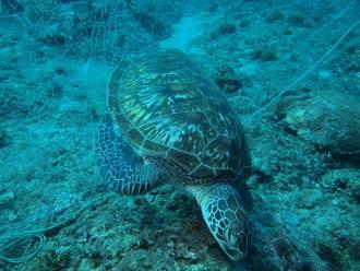 琉球海龜又斷魂 外地漁民棄流刺網造孽