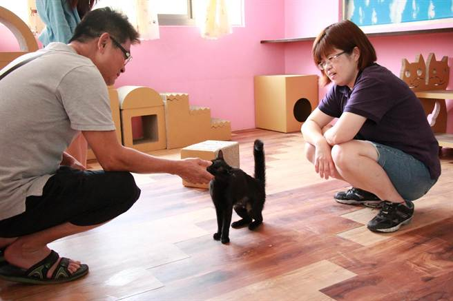 台中市府推動流浪犬貓認養率破7成,安樂死減近7成。(盧金足攝)