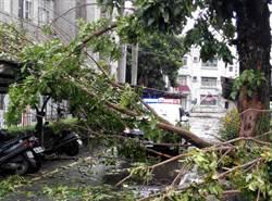 20多棵創署樹被吹倒 雲林地檢署成受災戶