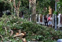 杜鵑掃過樹倒逾千棵 北市投入清理