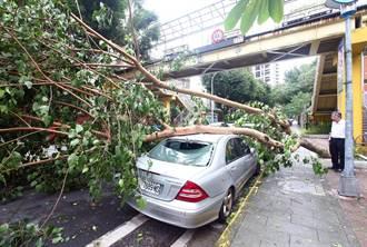 強颱吹倒大樹壓賓士 車主無言以對