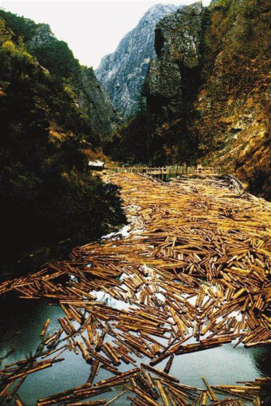 木裡縣鴨嘴河上漂浮著被砍伐的木頭(1997年11月攝/人民網)。