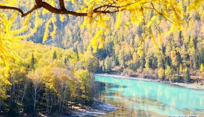 喀納斯湖秋季一片金黃美景,美不勝收。(新華網)