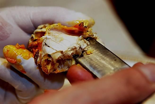「割刀」是用來切斷螃蟹體內筋膜等較厚部位之用。(圖/姚舜攝)