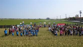 彰化香田稻收割 台大學生也來體驗