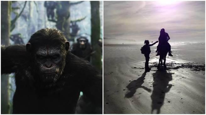 《猩球崛起》系列將帶來續集(圖/福斯影業、麥特里弗斯的推特)