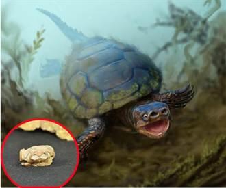 猶他州發現白堊紀時代豬鼻龜化石