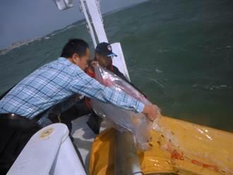 金門放流石斑魚苗 期待盎然生機