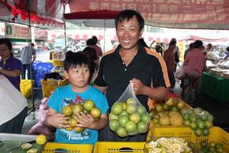 台南柳丁短收二成 價格對果農有利