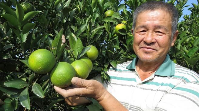 陳富雄是二林鎮少數碩果僅存的柳丁農。(鐘武達攝)
