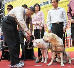 導盲犬Journey捨身救主 獲「榮譽市犬」表揚
