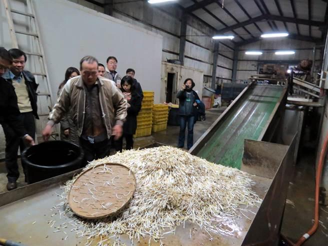 業者用工業用「保險粉」漂白豆芽菜,判刑8月確定。圖為日前邱爾為的員工示範如何將豆牙菜,透過輸送帶進入水池內,利用工業用保險粉和漂白劑漂白和保鮮。(黃文博翻攝)