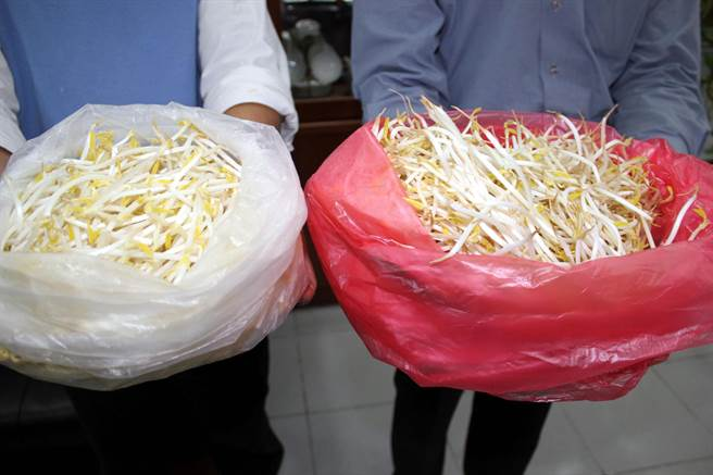 業者用工業用「保險粉」漂白豆芽菜,右邊紅色袋子內是未浸泡保險粉和漂白劑的豆芽菜,顏色明顯比左邊白色袋子內邱爾為所生產的豆芽菜黃了許多。(本報系資料照,黃文博攝)