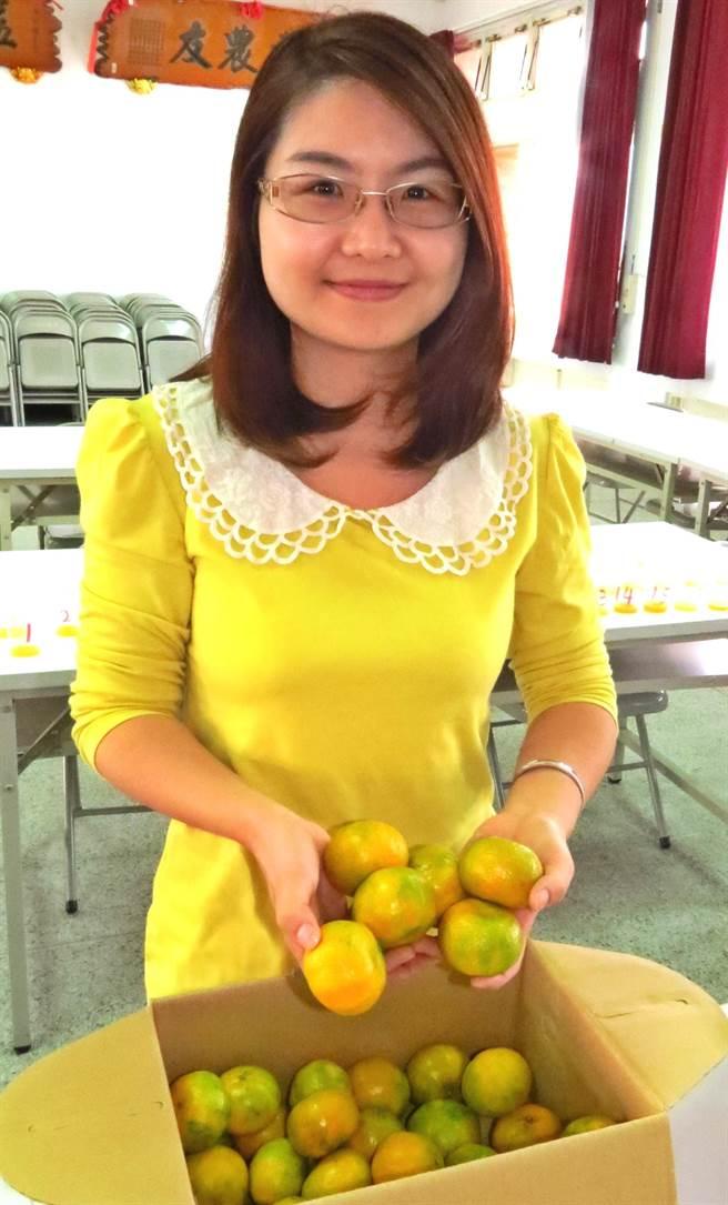中寮鄉出產,可媲美日本小甜橘的珍珠柑。(楊樹煌攝)