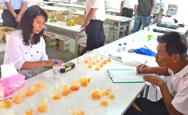 中寮鄉農會舉辦第1屆「珍珠柑品質評鑑」,進行糖度檢測情形。(楊樹煌攝)