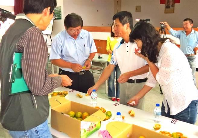 中寮鄉農會舉辦第1屆「珍珠柑品質評鑑」,由專家學者進行評鑑情形。(楊樹煌攝)