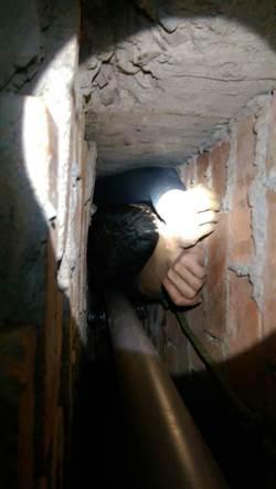 毒蟲卡兩牆管線間 出動特搜隊救援