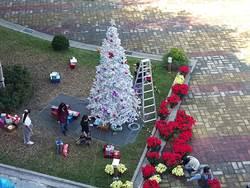 雲縣府首次過耶誕 矗2樓高白色耶誕樹