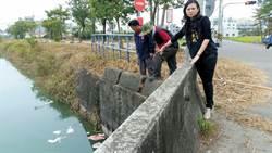 台南新市潭頂淨水場入水處 發現豬隻內臟、脂肪殘骸
