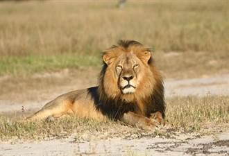 美國將非洲獅列瀕危物種名單