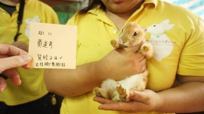 愛兔協會記錄下每一隻兔子的外觀、特徵,提供願意認養的民眾、兔友參考。(愛兔協會提供)