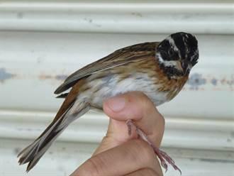 長期監測發現 太魯閣鳥類達210餘種