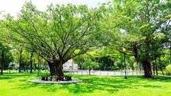 空品淨化區設574處 高雄全國第一