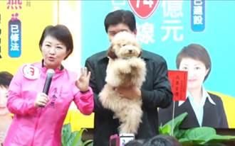 狗狗當助選員 拜票模樣吸睛